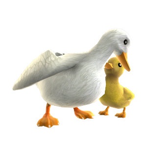Canard et caneton