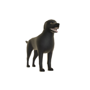 Dark Labrador - Buddy