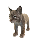 Lynx roux (peluche) 