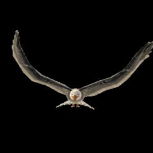 Mascota: águila calva