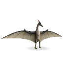 Pteranodon