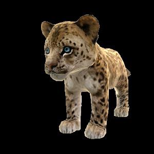 Léopard de Chine