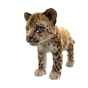 Leopardo de Amur 