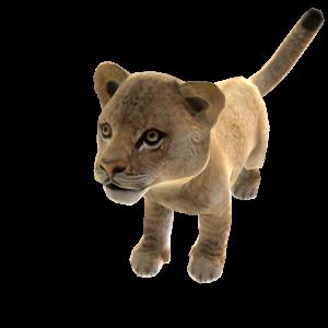 Lion d'Asie