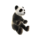 Pandabjrn 