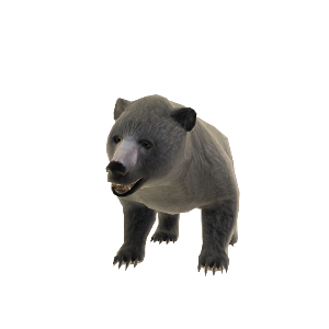 Bear Pet