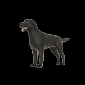 Dark Labrador - Pal