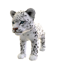 Lopard des neiges 