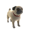 Pug Dog