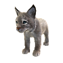 Canadian Lynx 