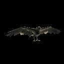 Crow Morrigan