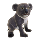 Koala Bear 