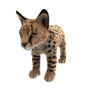 Serval (peluche) 
