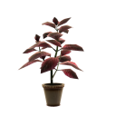 Red Herb Pot